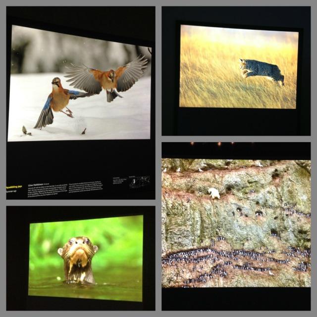 Wildlife Images